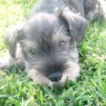 Foto del perfil de Ernesto