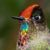 Logo del grupo Fotografia de Aves