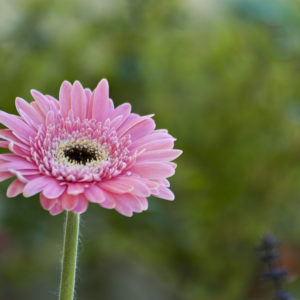 Algunas flores