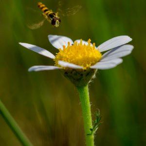 Biodiversidad en Las Tablas